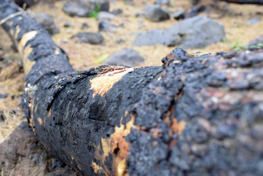 incendie vesuve